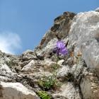 Flower on ruin