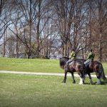 stockholm-horses-in-da-park