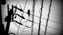 japan-kyoto-bird-on-wires