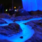 Blue light flow