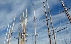Forest of masts