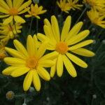Flowers III
