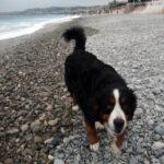 Dog approaching