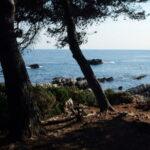Trees, sea behind